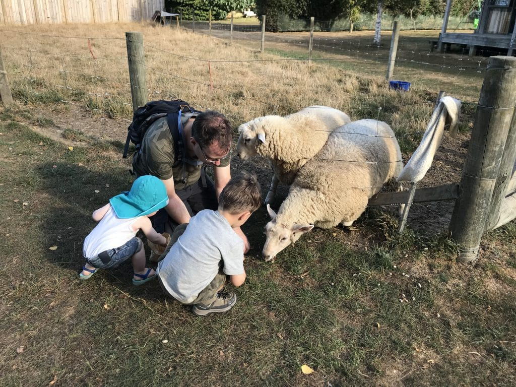 Smiths Farm schapen voeren
